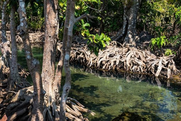 Мангровое дерево и болото, краби