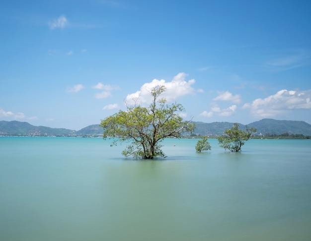 여름 시즌 푸 켓 섬에서 바다에 맹그로브 나무 푸 켓 태국에서 아름 다운 푸른 하늘 배경입니다.