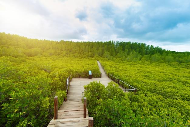 Мангровые заросли intung prong thong или golden mangrove field в устье реки пра сае, районг, таиланд