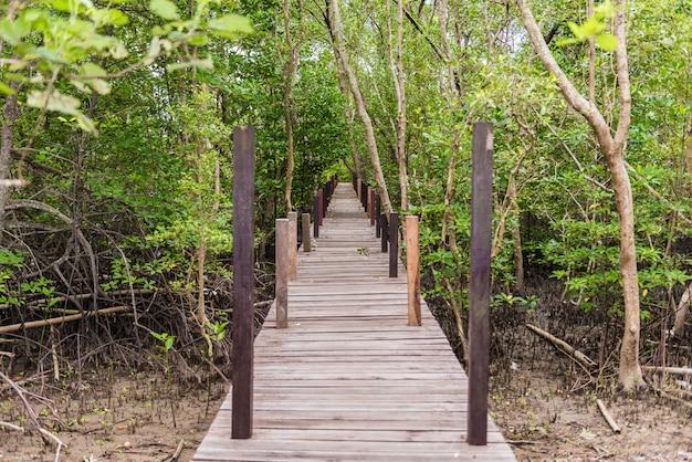 Мангровые заросли в тунг пунг тонг или золотое мангровое поле в устье пра сае, районг, таиланд