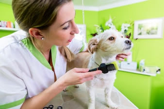ペットグルーミングサロンでの犬のためのマニキュア