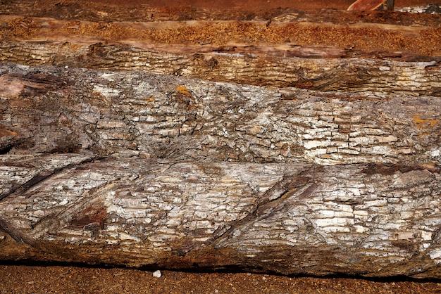 チコサポテmanilkara zapotaウッドメキシコ