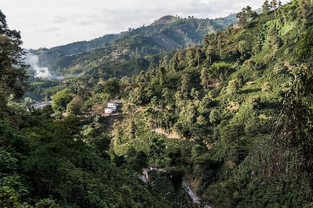 森林コーヒー農場コロンビアmanizales green