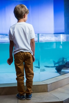 Молодой человек, глядя на manta ray