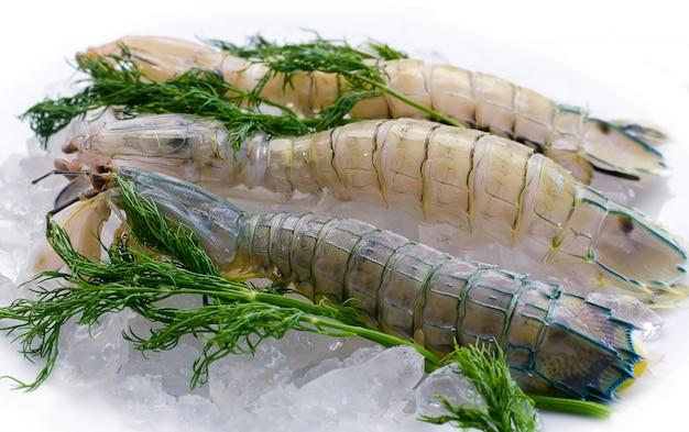 Mantis shrimp on ice with herbs