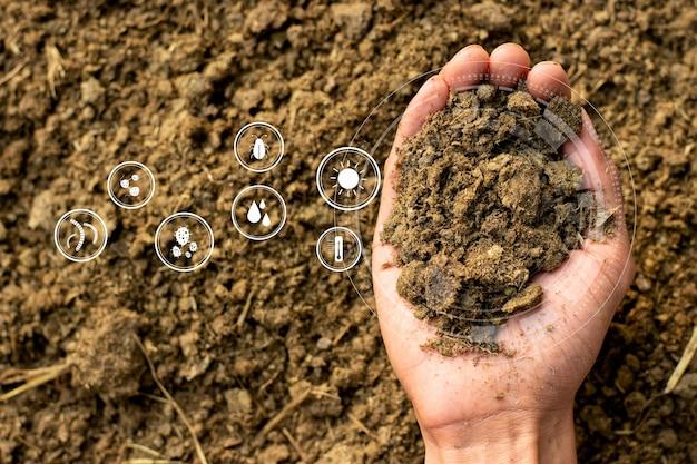 식물과 나무 재배를위한 농업 경제학자의 손에있는 비료