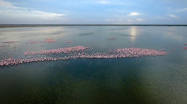 Many african flamingos, sunrise, sunset.