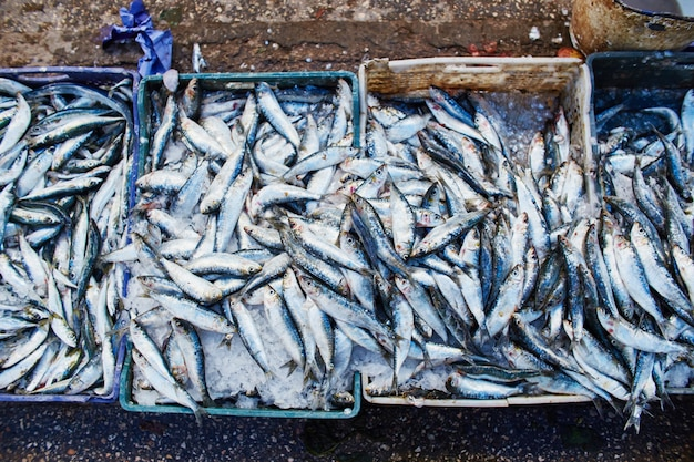 Many atlantic sardines fish are sold in boxes
