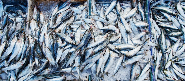 Many atlantic sardines fish sold in boxes market