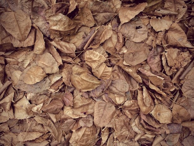 Many autumn leaves background, top view