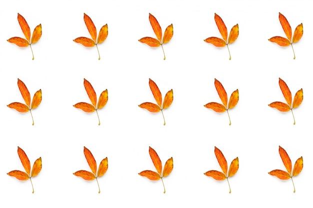 Много осенних желтых листьев на белом фоне
