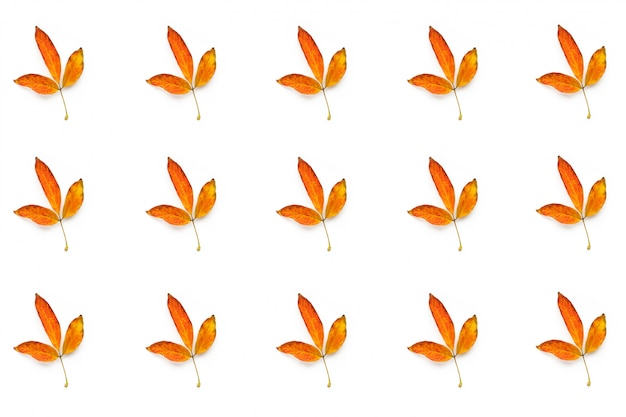 Many autumn yellow leaves isolated on white background