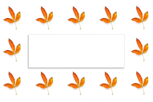 Many autumn yellow leaves isolated and white frame fot text on white background