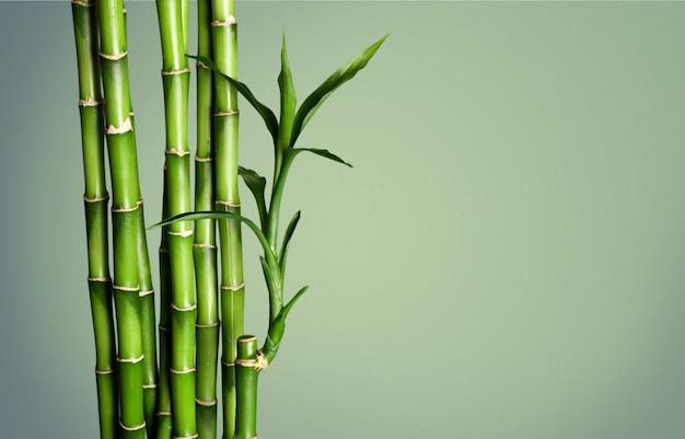 Many bamboo stalks on blurred background