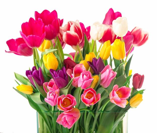 透明な背景に分離されたガラスの花瓶の葉を持つ多くの美しいカラフルなチューリップ。お祝いのデザインのための新鮮な春の花と水平方向の写真