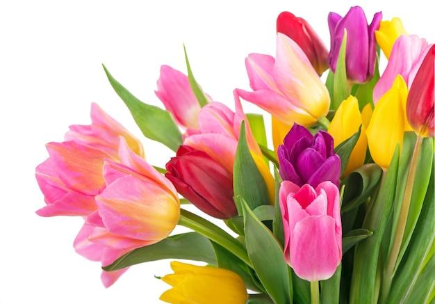 Многие красивые красочные тюльпаны с листьями в стеклянной вазе, изолированные на прозрачном фоне. горизонтальное фото со свежими весенними цветами для любого праздничного оформления