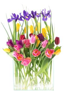 Многие красивые красочные тюльпаны с листьями в стеклянной вазе, изолированные на прозрачном фоне. фото со свежими весенними цветами для любого праздничного оформления