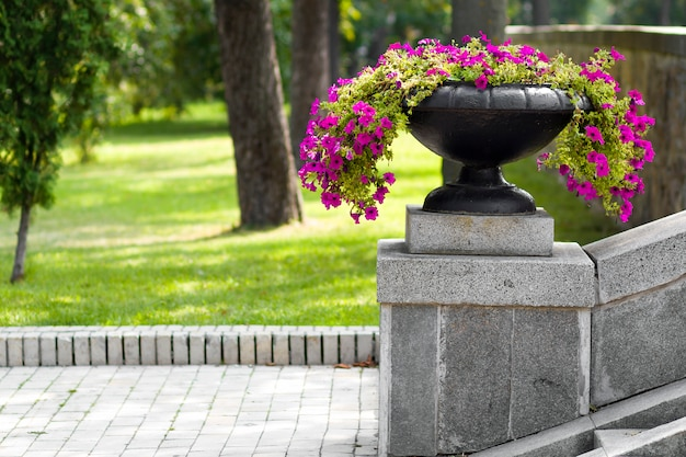 Many beautiful flowers growing and blooming in a big stone pot in park