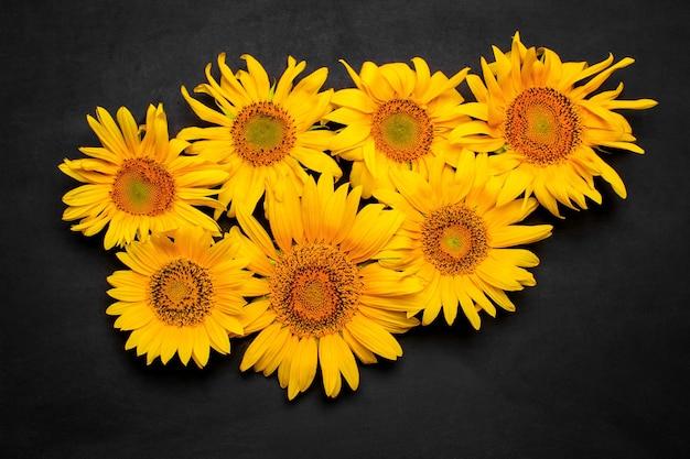 블랙에 많은 아름다운 노란 해바라기