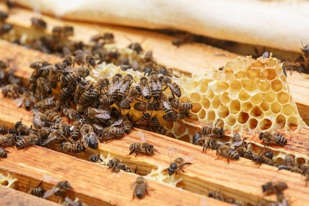 ハイブの巣から蜂蜜の残骸を食べる多くのミツバチ