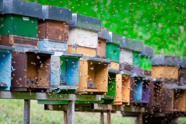 Много пчел летают вокруг улья.