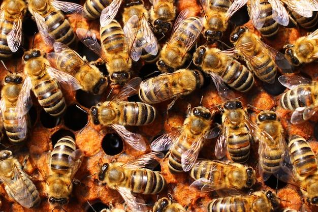 Многие пчелы в улье крупным планом Premium Фотографии