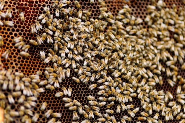 フレームのクローズアップに多くのミツバチ