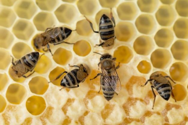 多くのミツバチがハニカムに取り組んでいます