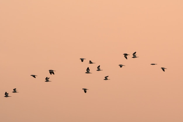 Many birds are flying to migrate to find a new habitat