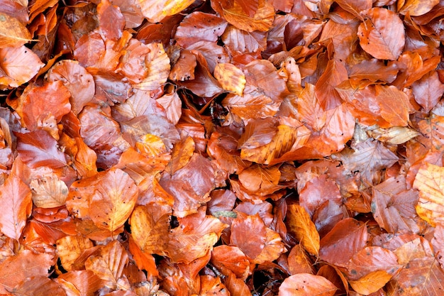 Many brown wet leaves together for wallpaper