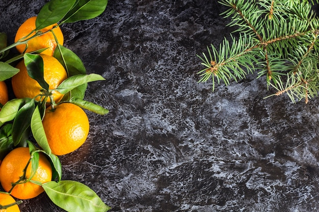 Many christmas orange tangerines with green leaves and fir tree on dark background with copy space