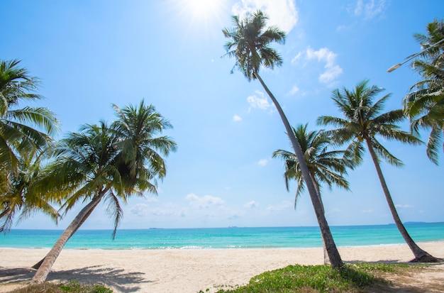 Many coconut palms on the beach  background sea and sky at cabana beach , chumphon , thailand.