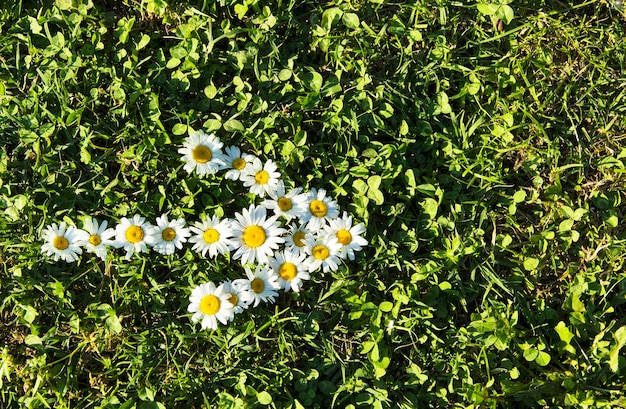Many daisy laid out in the shape of an arrow indicating the direction on a green meadow