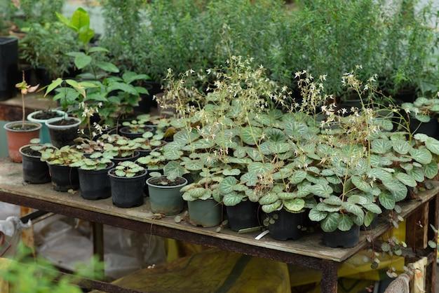 植物園の植物の多くの異なる鉢