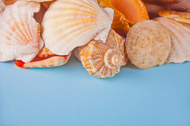 Many different seashells. top view. copyspace.