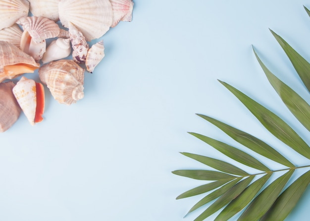 Many different seashells and tropical palm leaf. top view. copyspace.