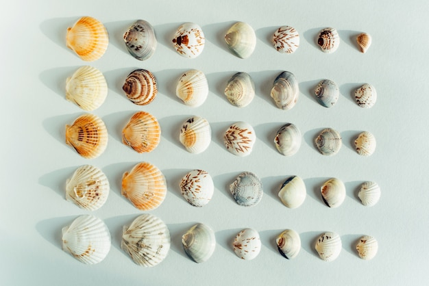 Many different seashells on a white background. minimalism layout. tropical summer vacation or sea food concept.