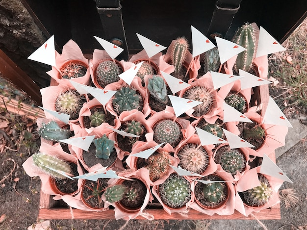 Many different small cactus in a beautiful pink wrappers in a wooden box rustic style