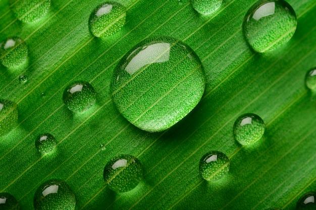 바나나 잎에 물방울의 많은 방울