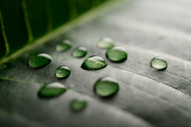 Many drops of water falling on the leaves