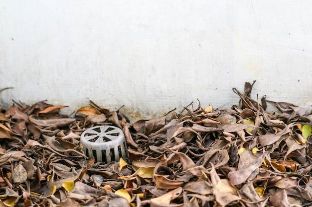 多くの乾燥した葉が排水口を詰まらせ、水が建物内に漏れた