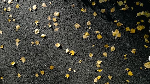 Многие опавшие желтые листья на мокрый асфальт после дождя. осенний фон вид сверху.