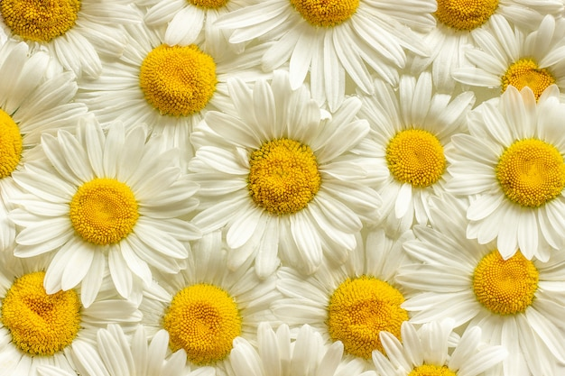 Many field flowers chamomile daisies close up
