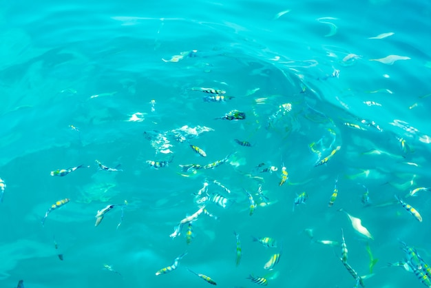 바다에서 많은 물고기