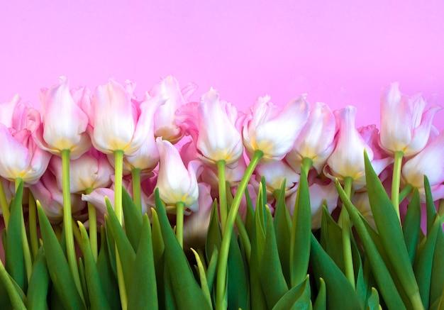 Много цветов на розовом фоне розовые свежие тюльпаны blossom concept
