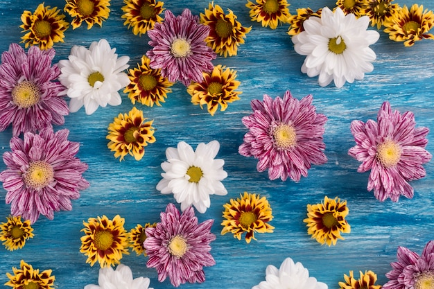 Many fresh flowers on painted blue backdrop