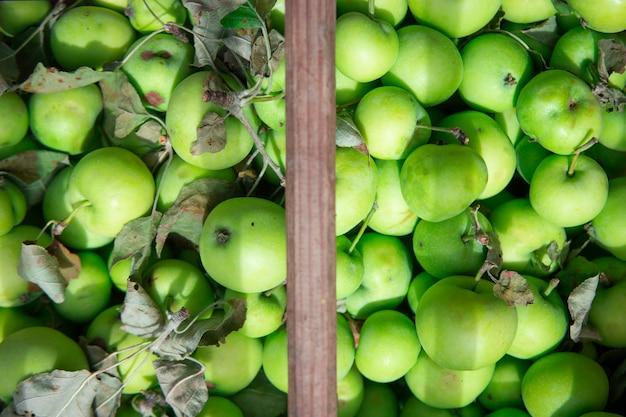 Многие свежие зеленые яблоки с листьями в деревянной корзине. натуральные продукты