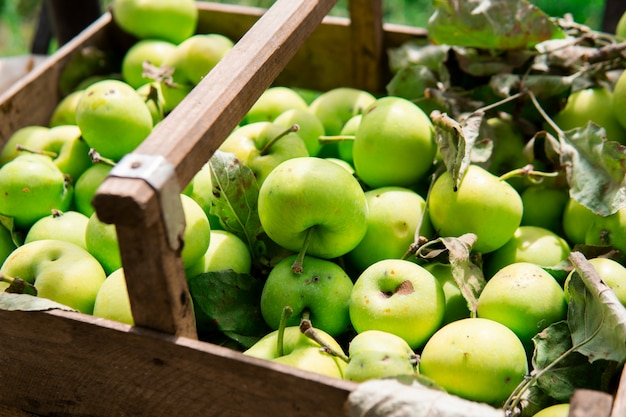Many fresh green apples with leaves in a wooden basket. natural products