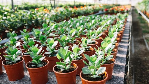 냄비에 많은 신선한 녹색 식물