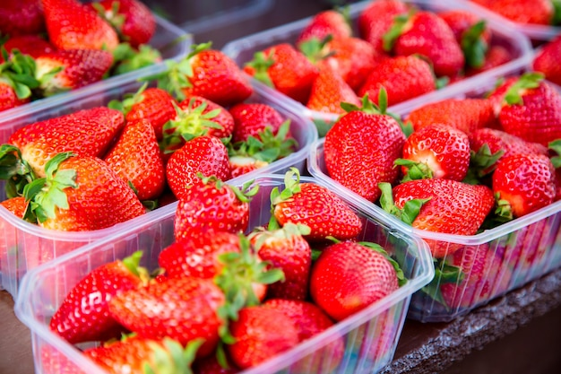 Many fresh strawberries in boxes for sale at a fruit market outdoors